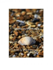 Shells on the Beach (eBook)