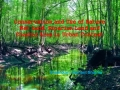 Conservation of Wetlands