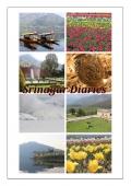 Srinagar Diaries